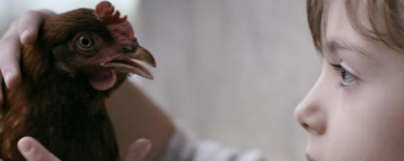 baja ok_the chicken
